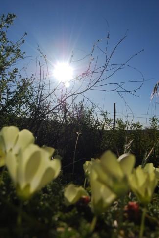 Namaqualand 6