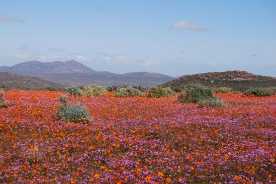 Namibia 166